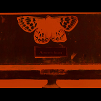 The Duke of Burgundy film